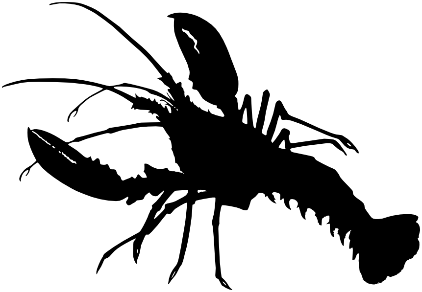 pics of lobsters lobster png black and white transparent lobster black and pics of lobsters