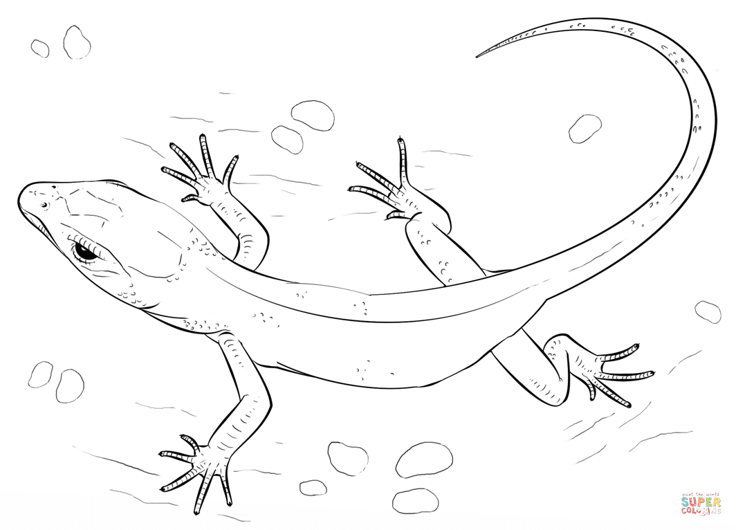picture of a lizard to colour in free lizard coloring pages in to lizard picture of colour a