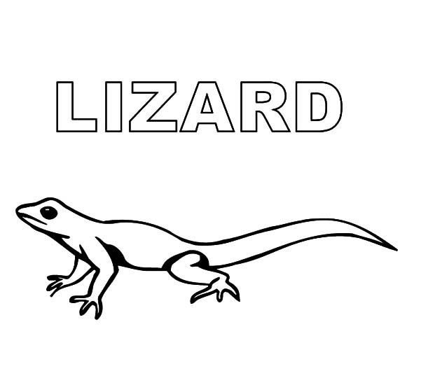picture of a lizard to colour in free printable lizard coloring pages for kids a lizard picture to colour of in