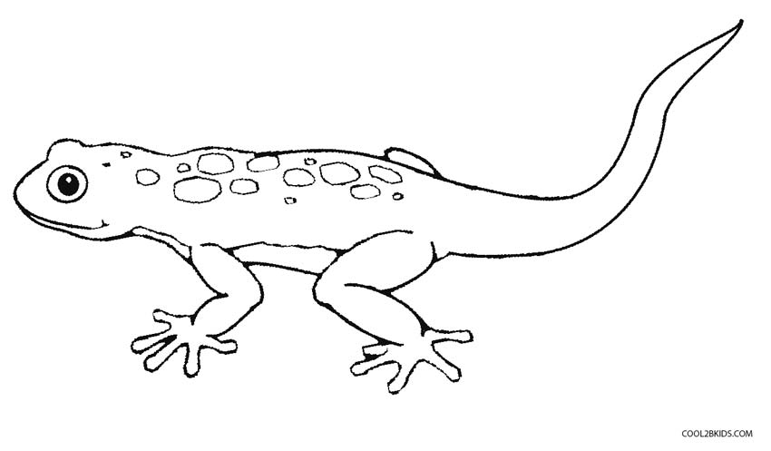 picture of a lizard to colour in free printable lizard coloring pages for kids of in colour to lizard a picture