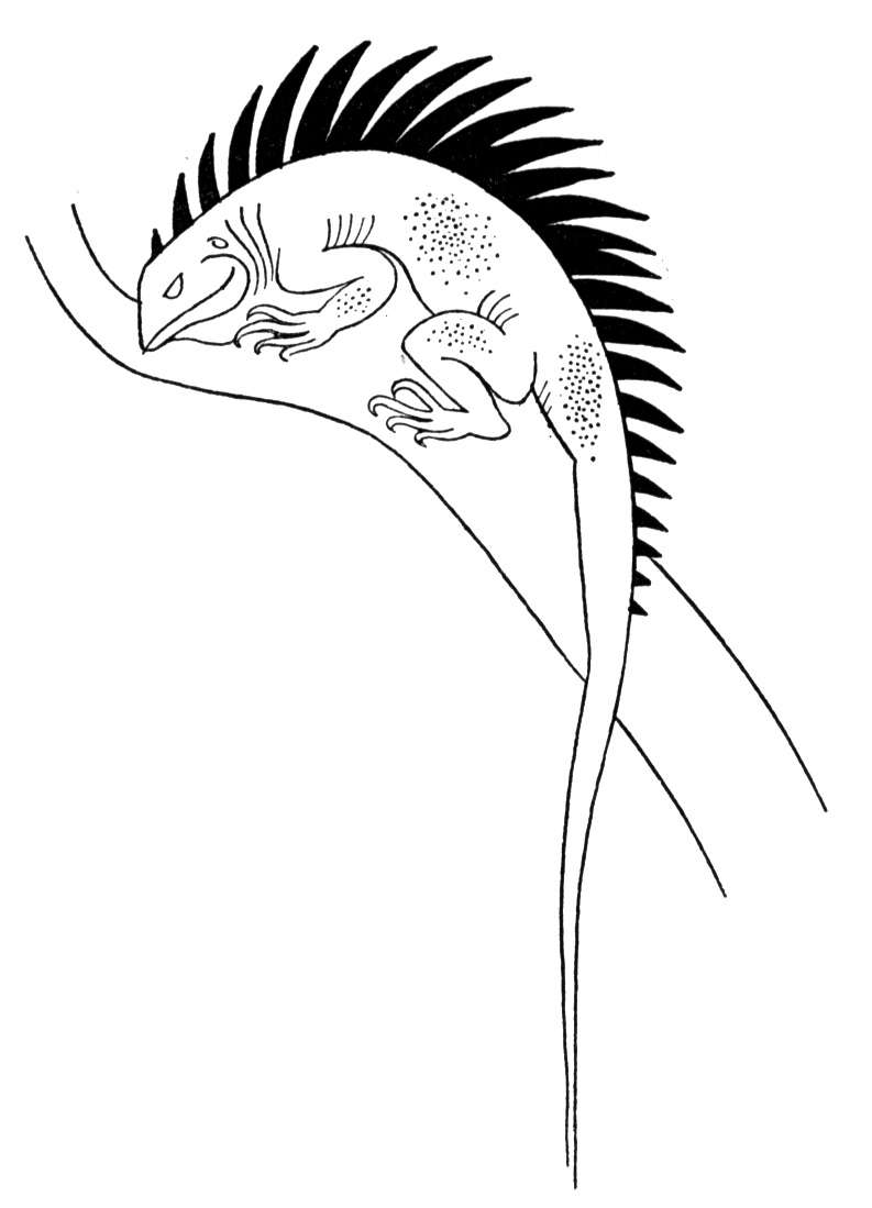 picture of a lizard to colour in little lizard cartoon illustration isolated image coloring picture lizard a to colour in of