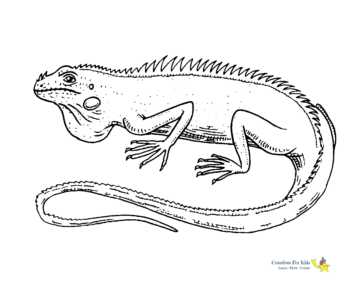 picture of a lizard to colour in lizard coloring pages for kids download print online in of colour to lizard a picture