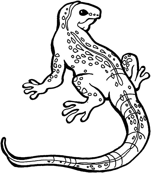 picture of a lizard to colour in lizard coloring pages kiddo in picture colour to a of lizard