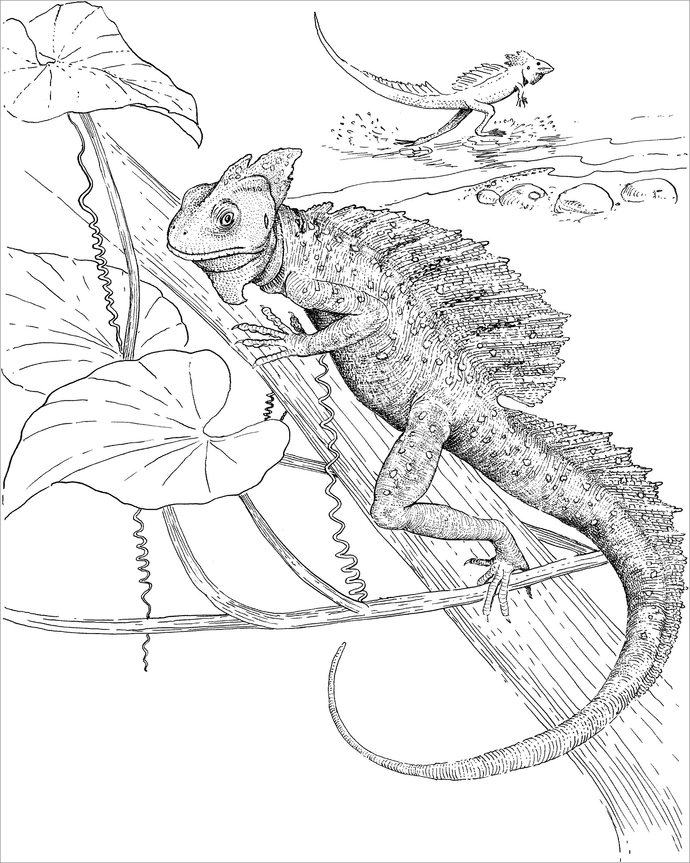 picture of a lizard to colour in printable lizard coloring pages for kids cool2bkids a lizard to of in picture colour