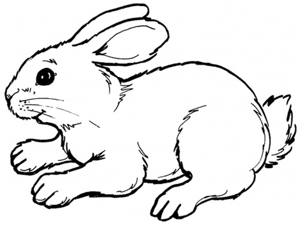 picture of a rabbit to color bunny rabbit coloring page printable spring coloring rabbit to color picture a of