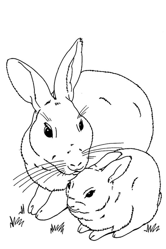 picture of a rabbit to color bunny rabbit coloring pages to download and print for free picture rabbit a to of color