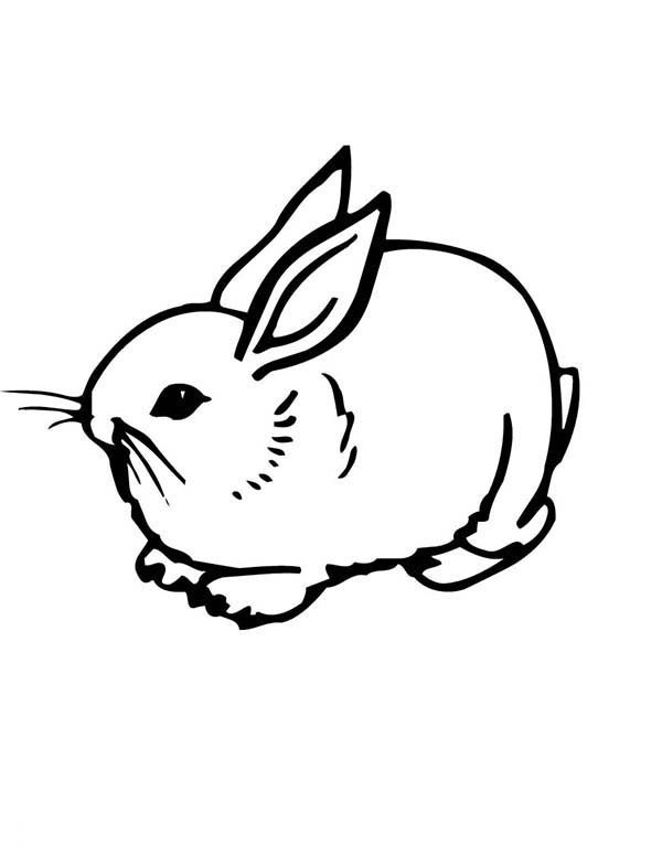 picture of a rabbit to color coloring pages of a rabbit printable free coloring sheets of color a to picture rabbit