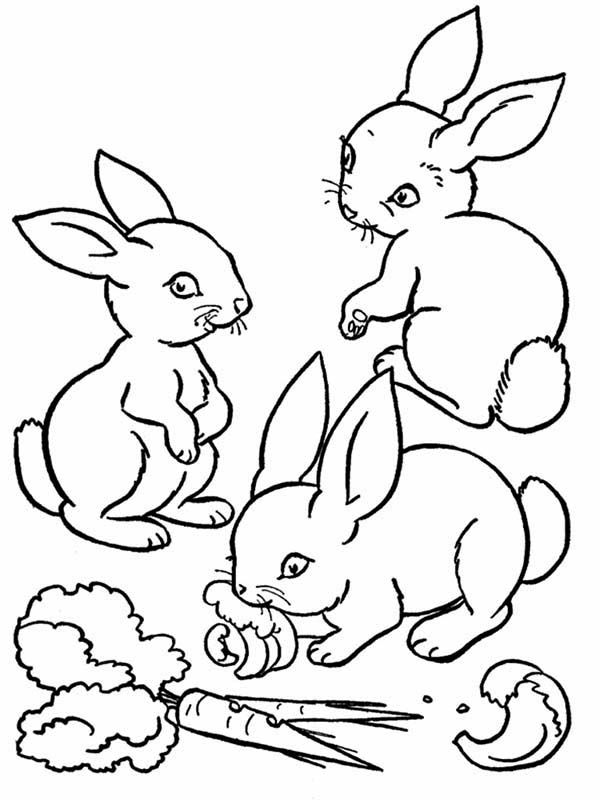 picture of a rabbit to color free printable rabbit coloring pages for kids rabbit picture of to color a