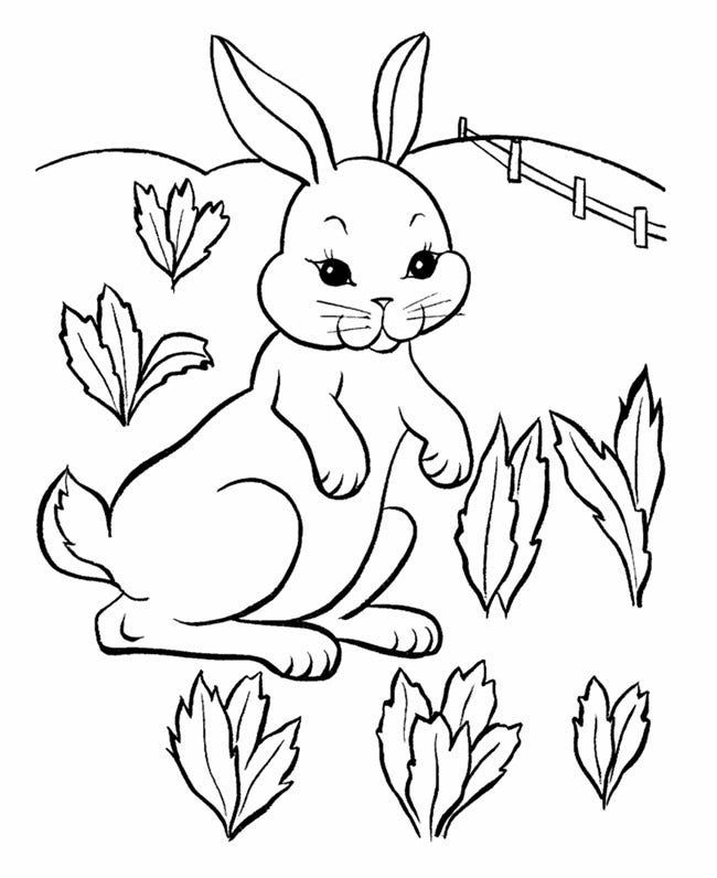picture of a rabbit to color rabbit coloring pages coloringbay rabbit to picture of a color