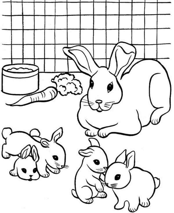 picture of a rabbit to color small rabbit coloring page free printable coloring pages a picture rabbit of color to