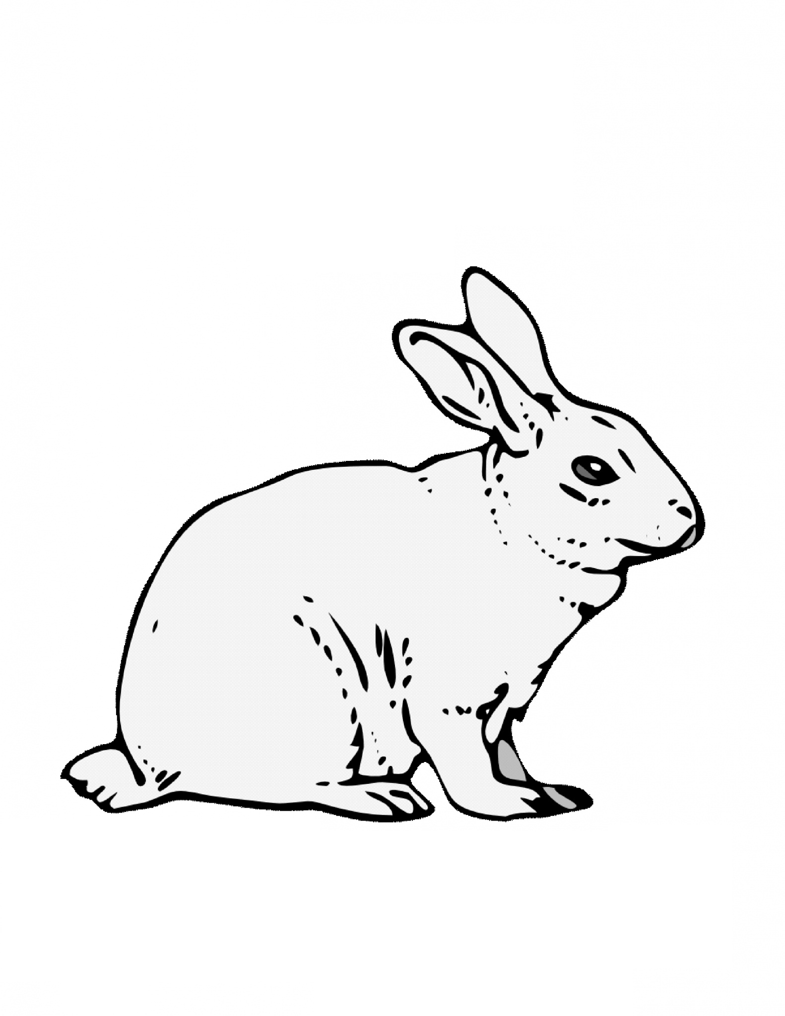 picture of a rabbit to color three cute bunnies eating the carrot coloring page rabbit of to a picture color