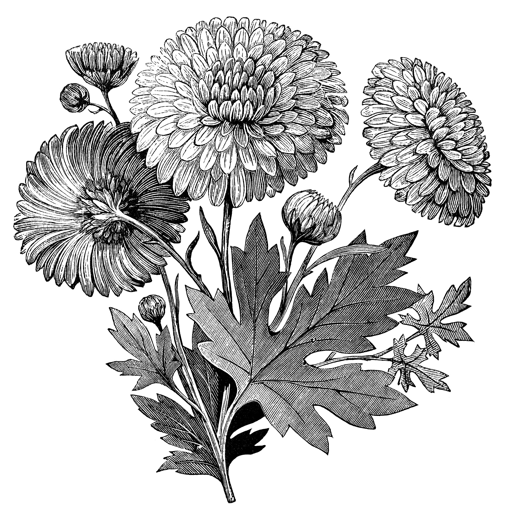picture of flowers to print flower coloring printables for kids to flowers picture print of
