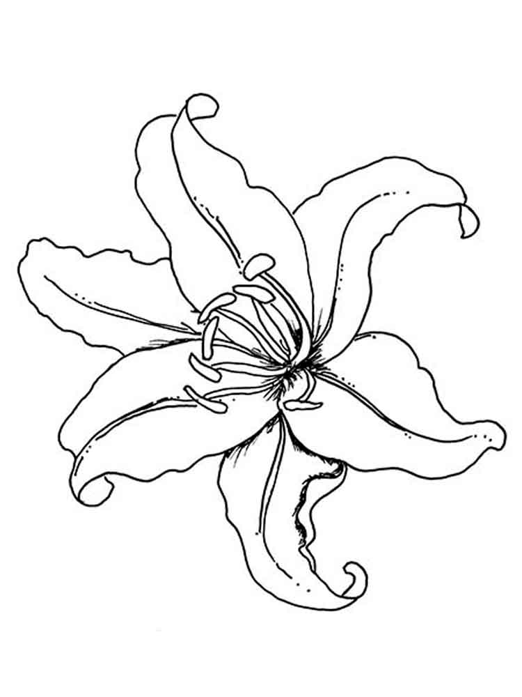 picture of flowers to print free easy to print flower coloring pages tulamama picture flowers to print of