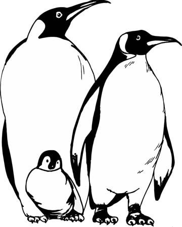 picture of penguin to color penguin coloring pages of color to penguin picture