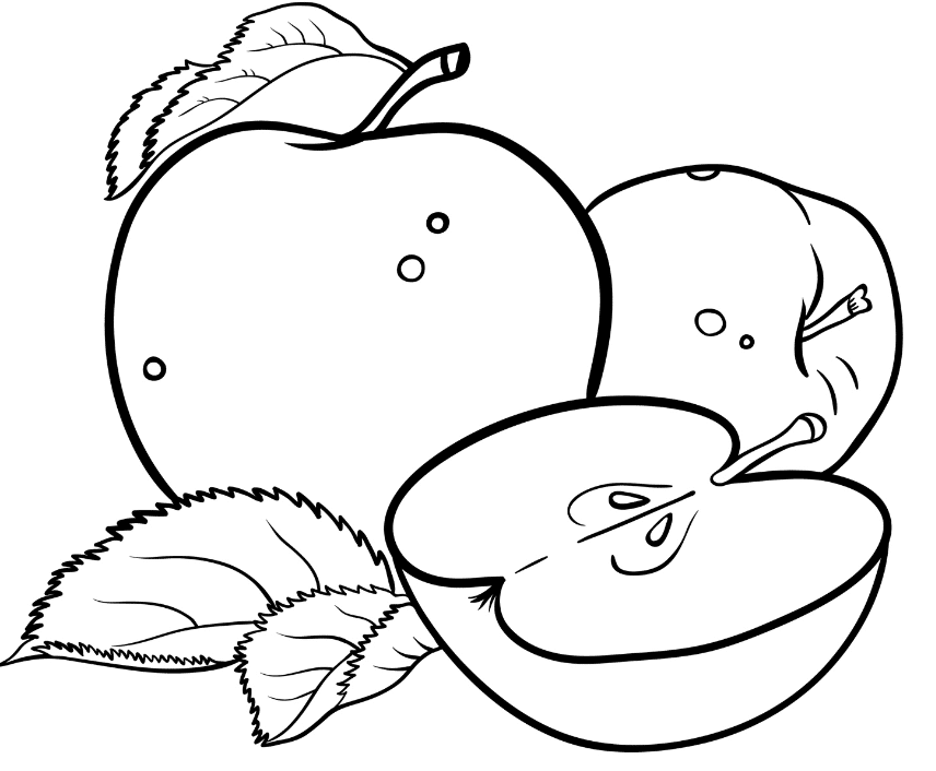 pictures of apples to color 6 best images of apple outline printable full page apple color apples of to pictures
