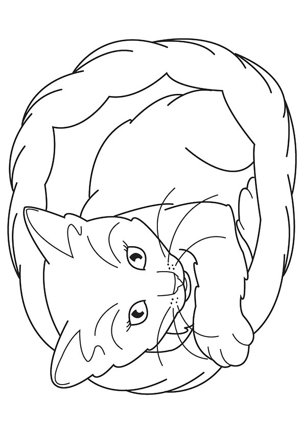 pictures of cats and kittens to color coloring pages fun the marie cat coloring pages to of cats pictures and kittens color