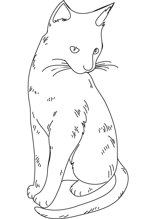 pictures of cats and kittens to color free printable cat coloring pages for kids pictures cats and to kittens color of