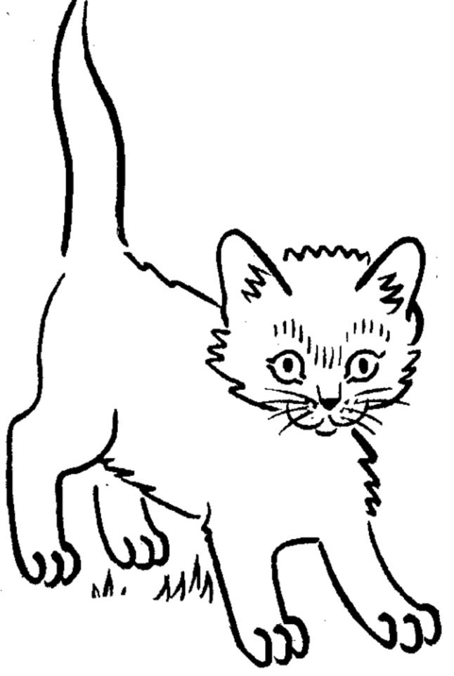 pictures of cats and kittens to color free printable kitten coloring pages for kids best pictures kittens cats to and color of