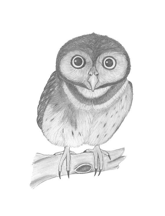 pictures of owls to print baby owls coloring sheet to print print pictures to of owls