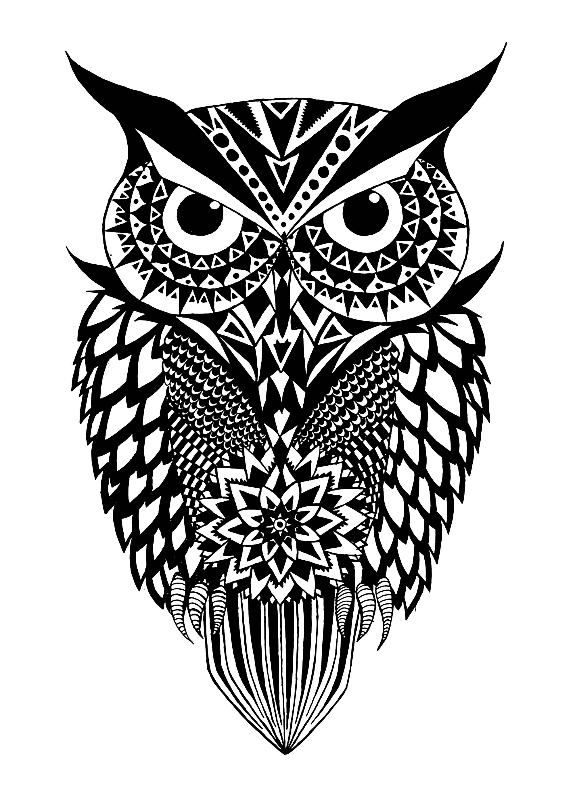 pictures of owls to print owls to print owls kids coloring pages of print owls to pictures