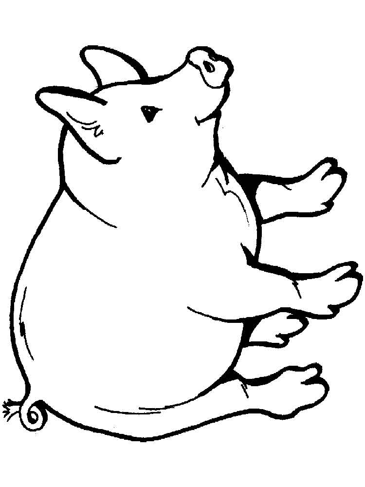 pictures of pigs to color fat cute pig printable coloring books pictures to of pigs color