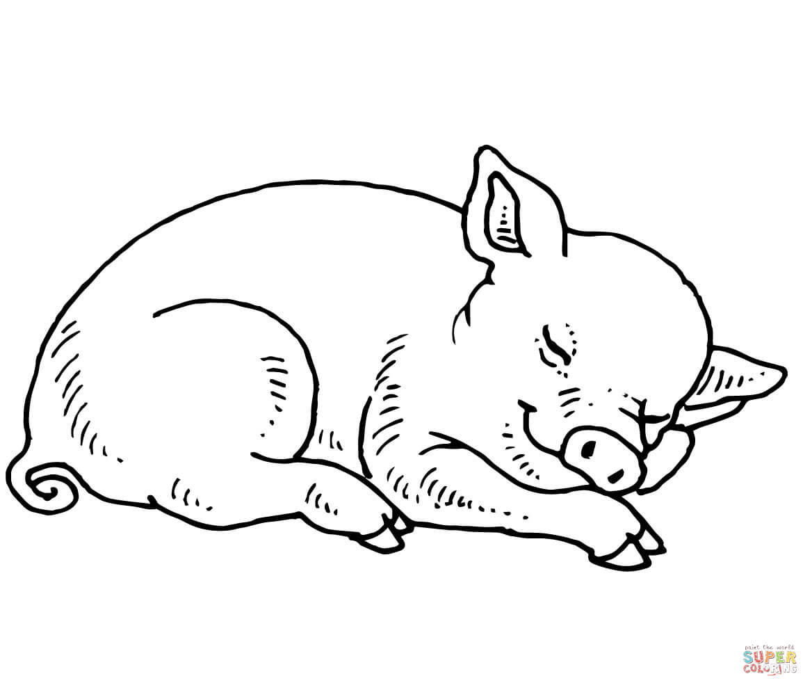 pictures of pigs to color pig coloring pages 36jpg coloring home to of color pictures pigs