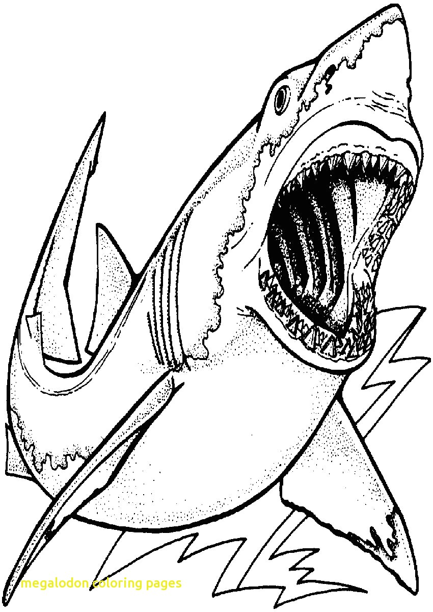 pictures of sharks to colour in 33 free shark coloring pages printable colour to pictures of sharks in