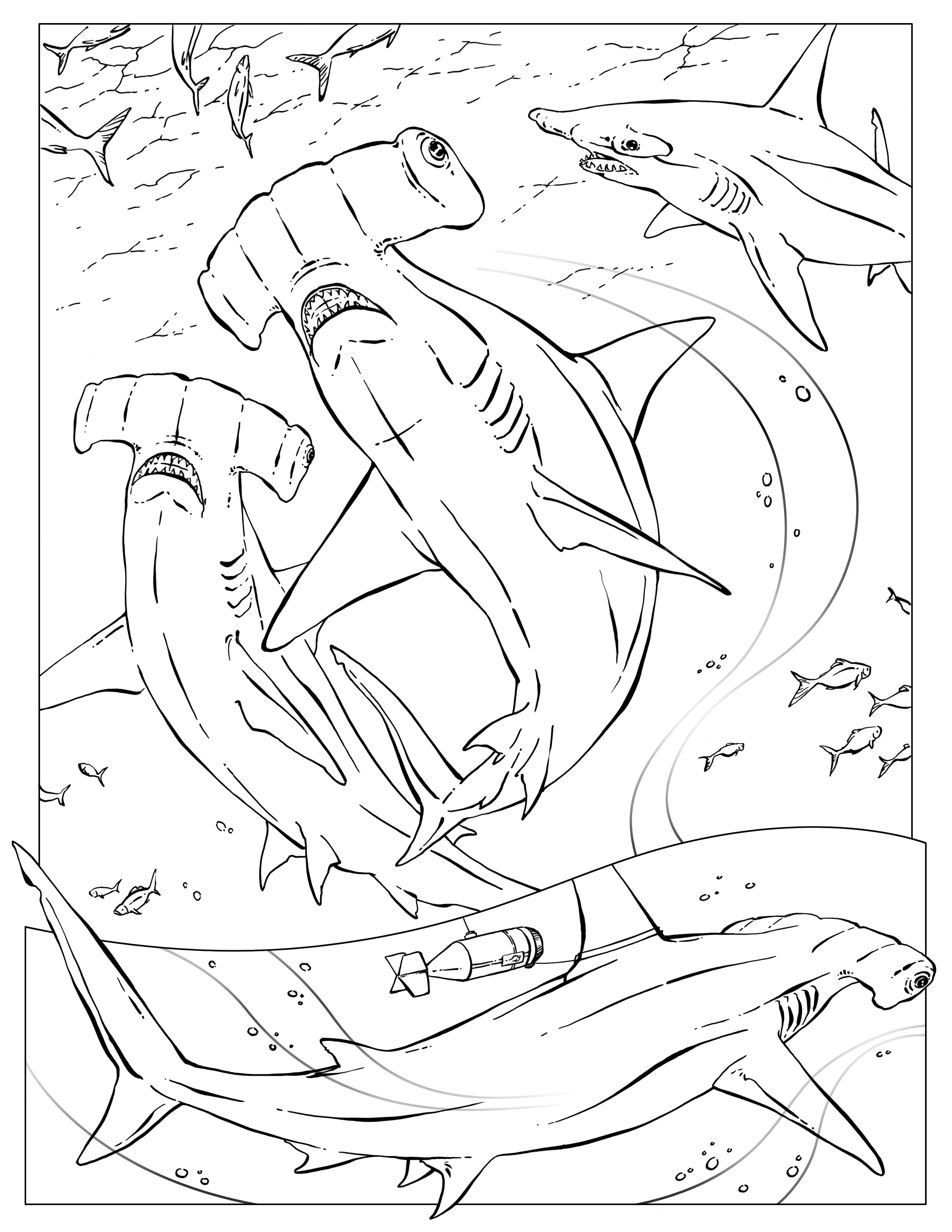 pictures of sharks to colour in great white shark coloring pages downloadable and of colour to sharks pictures in