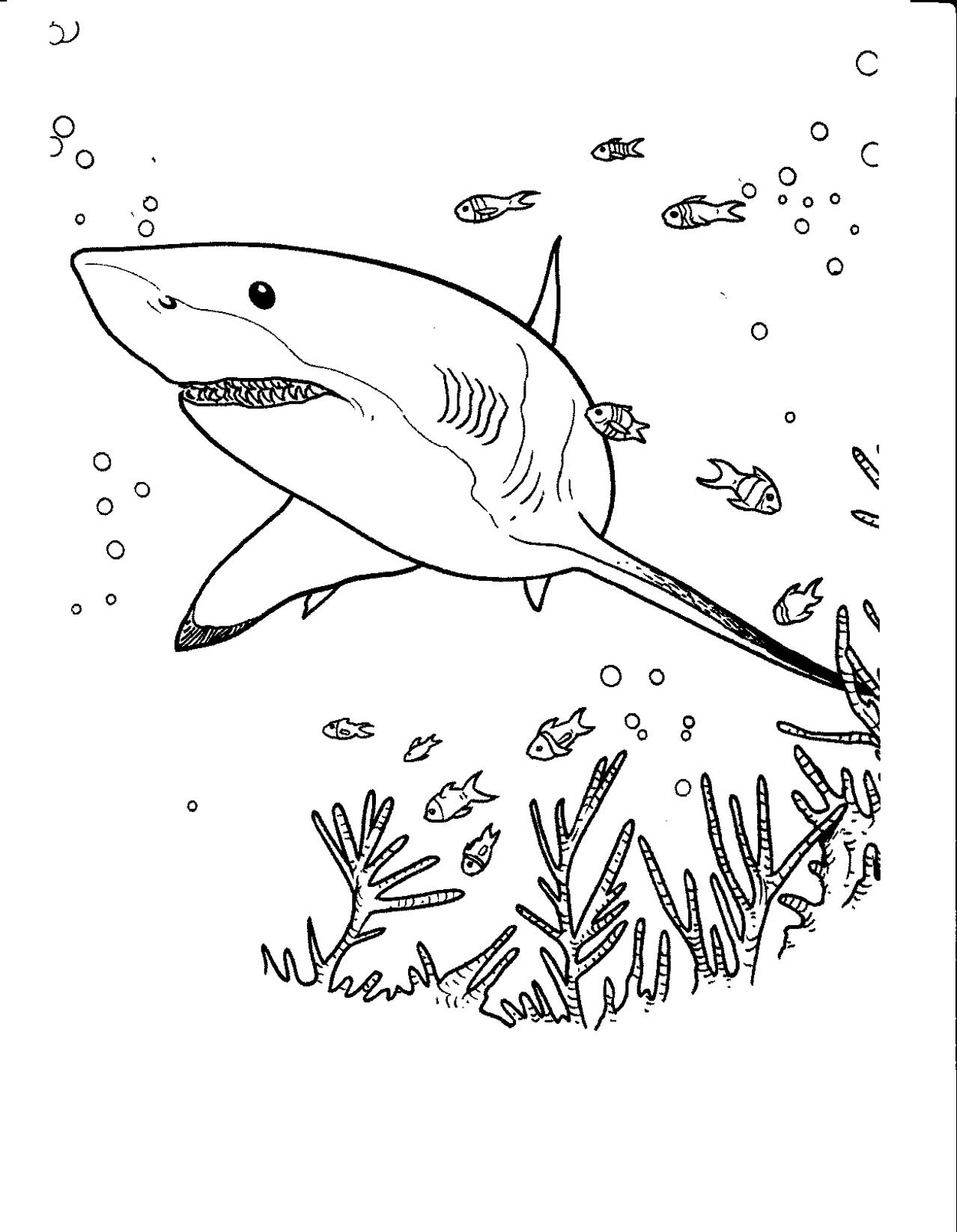 pictures of sharks to colour in great white shark coloring pages to download and print for in pictures of to colour sharks