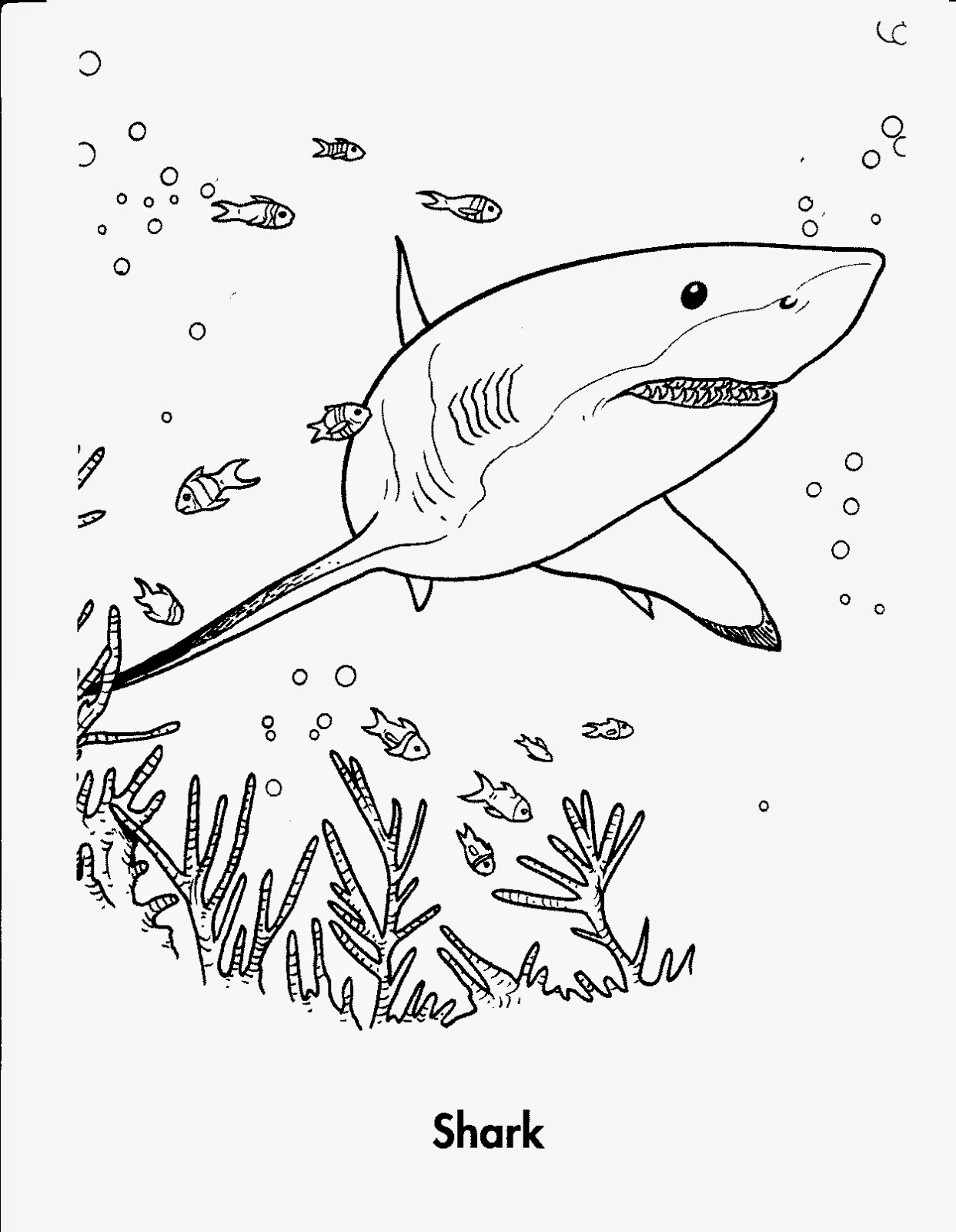 pictures of sharks to colour in mad family fun shark coloring pages to colour sharks in pictures of