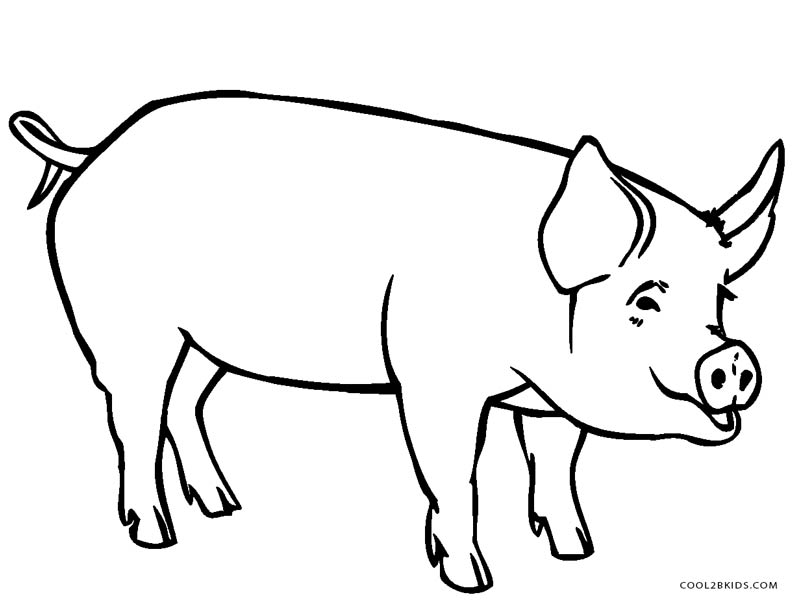 pig pictures to colour free printable pig coloring pages for kids cool2bkids colour pictures to pig