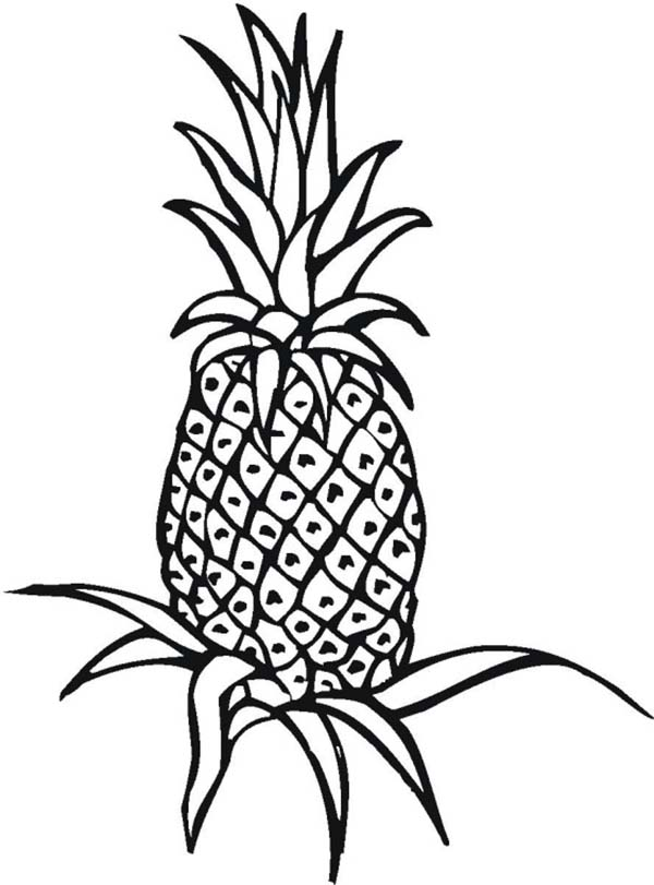 pineapple colouring picture pineapple colouring picture pineapple colouring picture