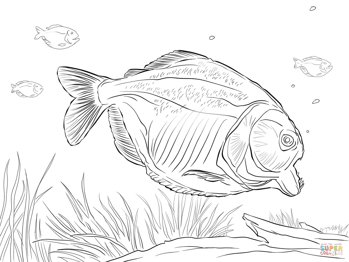 piranha coloring page piranha coloring pages coloring pages to download and print piranha coloring page 1 1