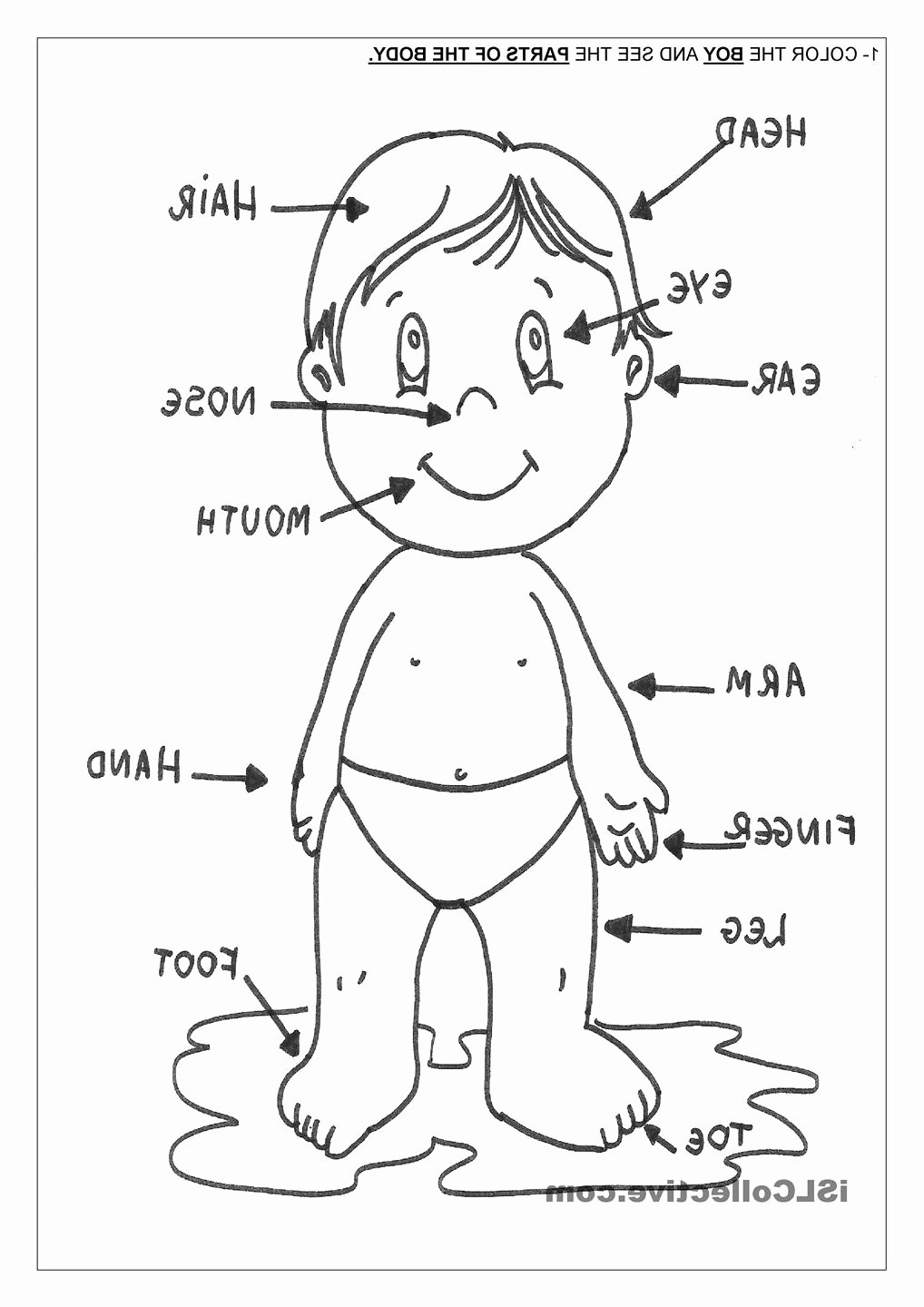 preschool body parts coloring best 25 body parts preschool ideas on pinterest body parts preschool coloring body