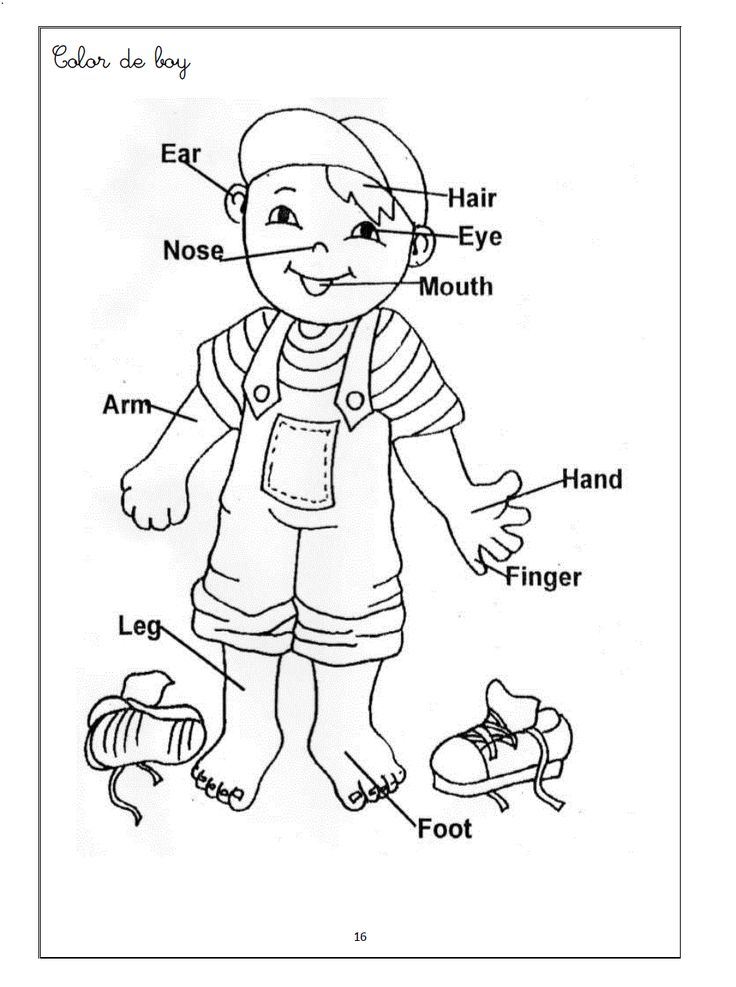 preschool body parts coloring body parts coloring pages coloring pages to download and parts coloring preschool body
