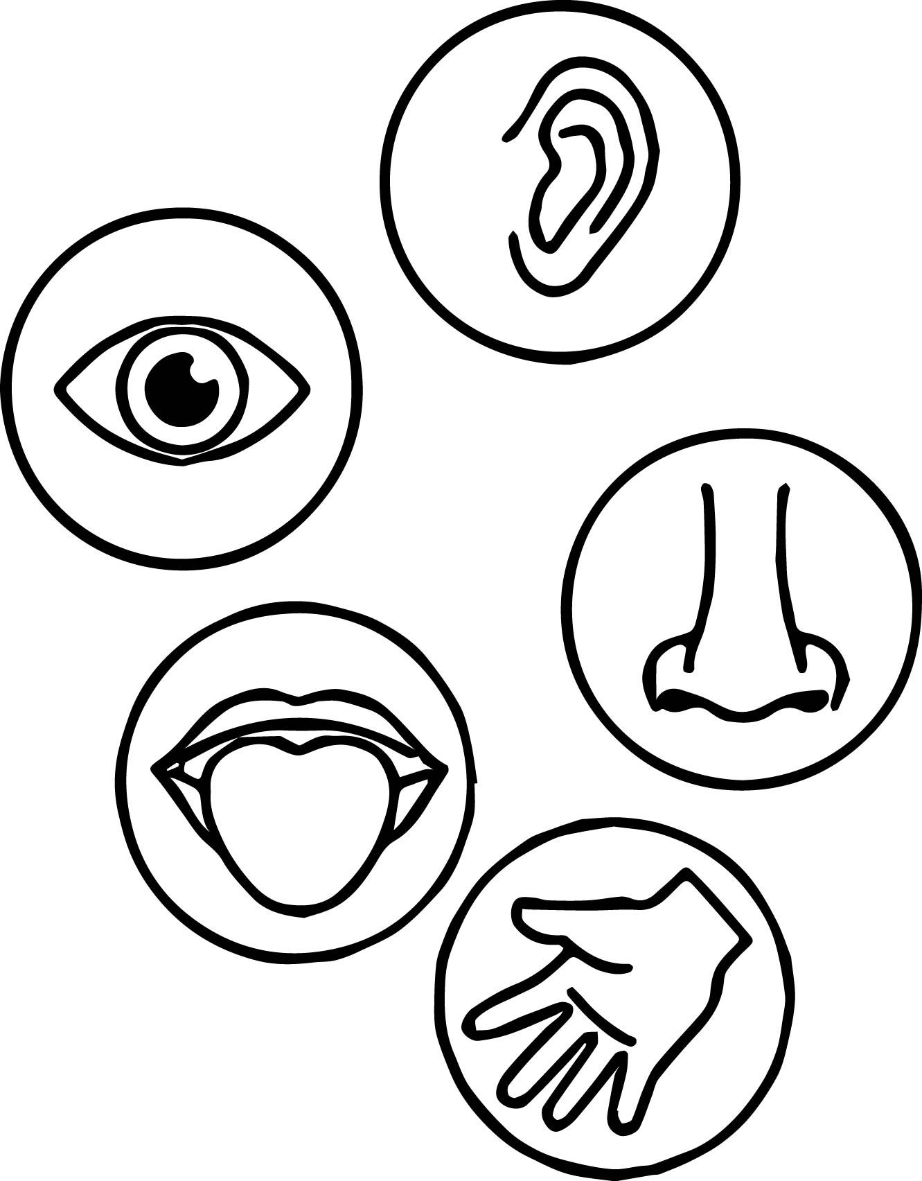 printable 5 senses coloring pages 5 senses coloring pages free download on clipartmag coloring printable 5 pages senses