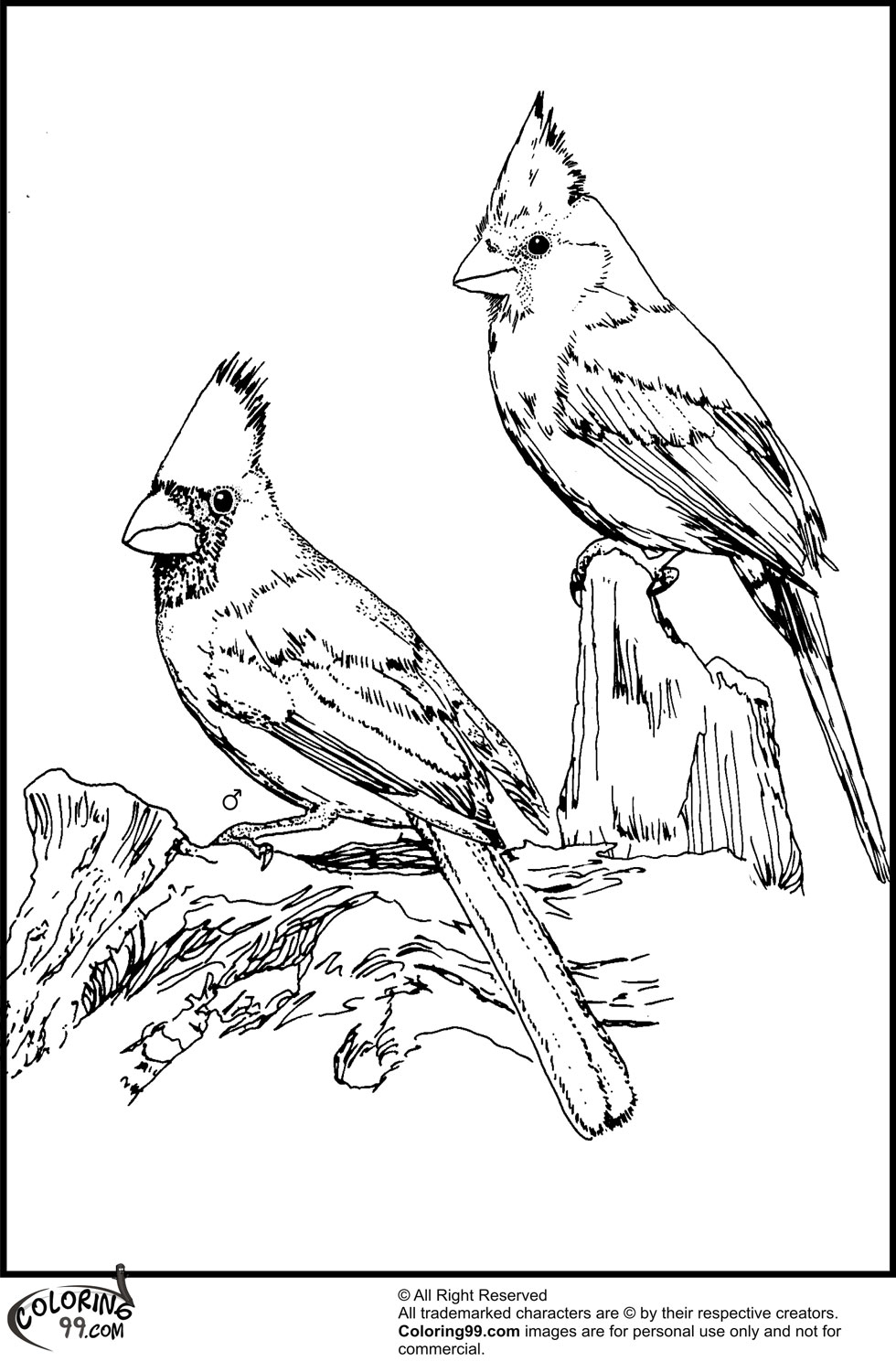 printable bird coloring pages american cardinal coloring pages team colors pages printable bird coloring
