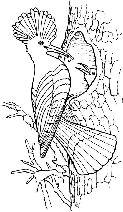 printable bird coloring pages bird coloring pages coloringpages1001com pages printable bird coloring