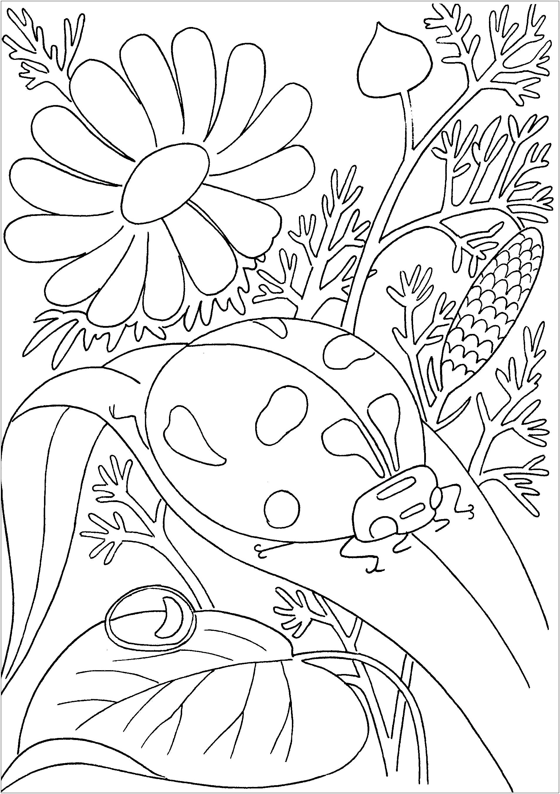 printable bug coloring pages coloring pages animal place part 2 pages coloring bug printable