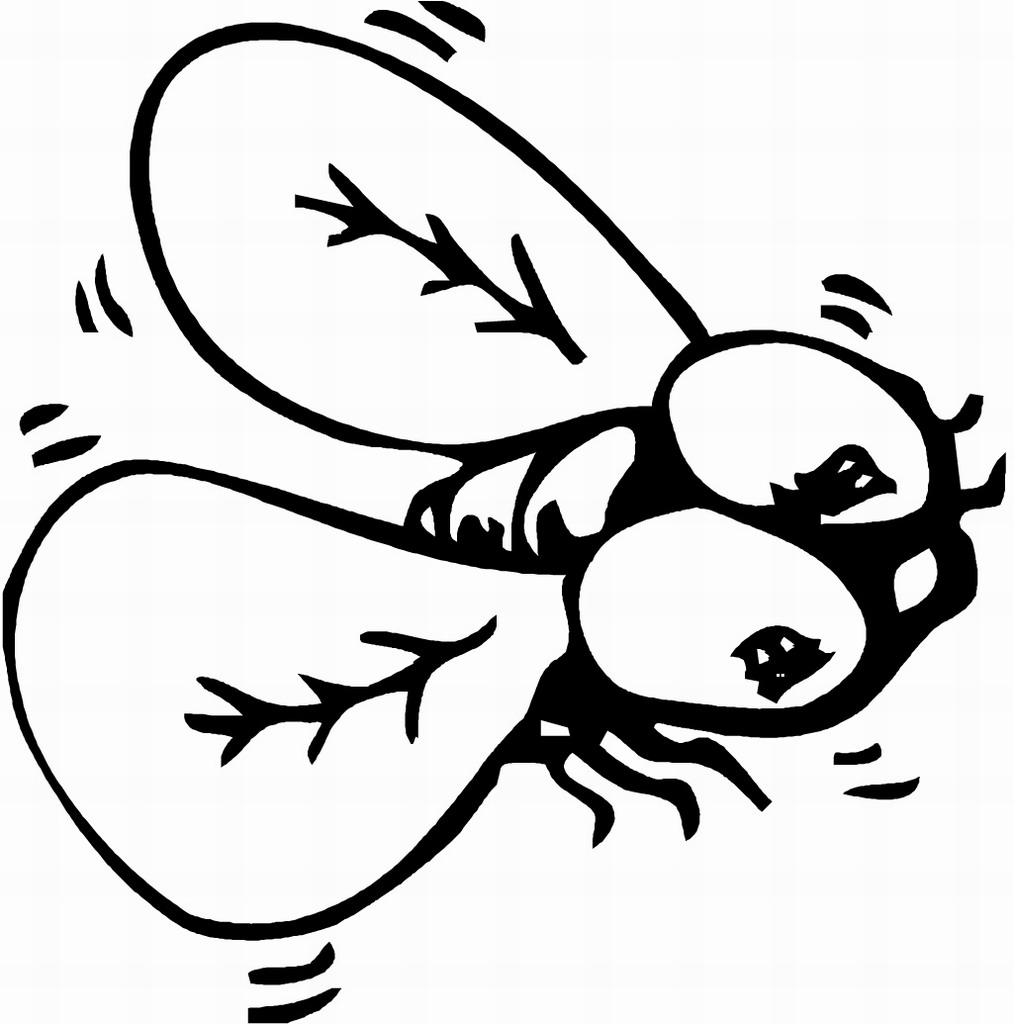 printable bug coloring pages insect coloring pages to download and print for free coloring printable bug pages