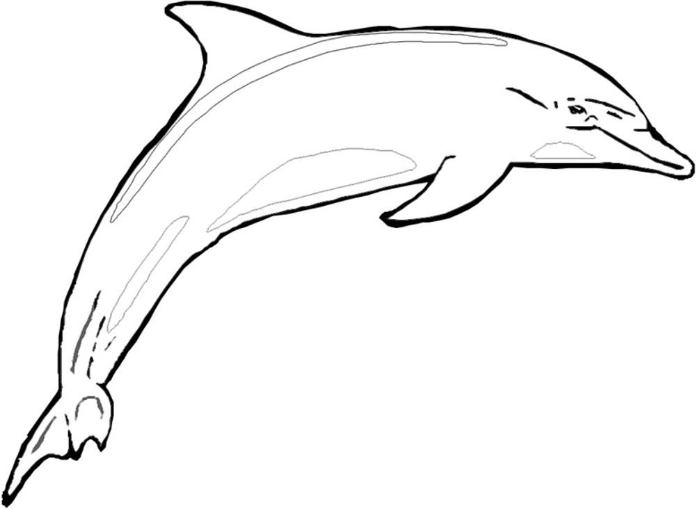 printable dolphin coloring pages print download my experience of making dolphin printable pages coloring dolphin