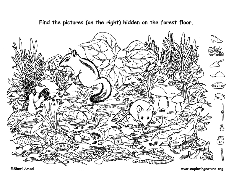 printable forest pictures baby forest animal coloring pages free printable printable pictures forest