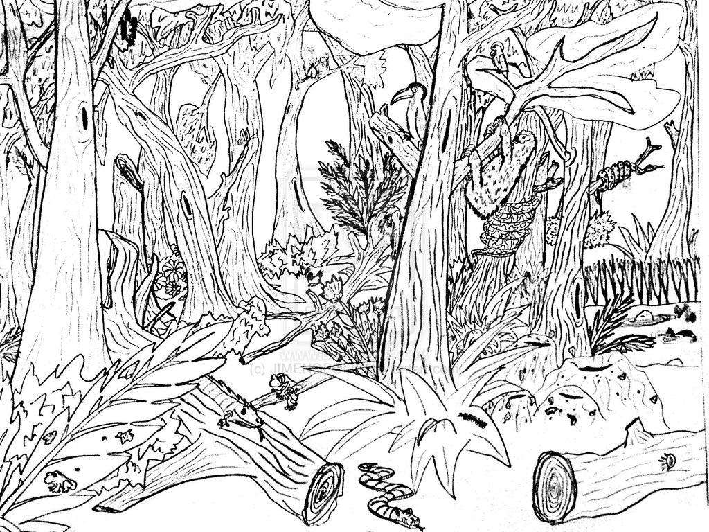 printable forest pictures forest coloring pages download and print forest coloring printable pictures forest