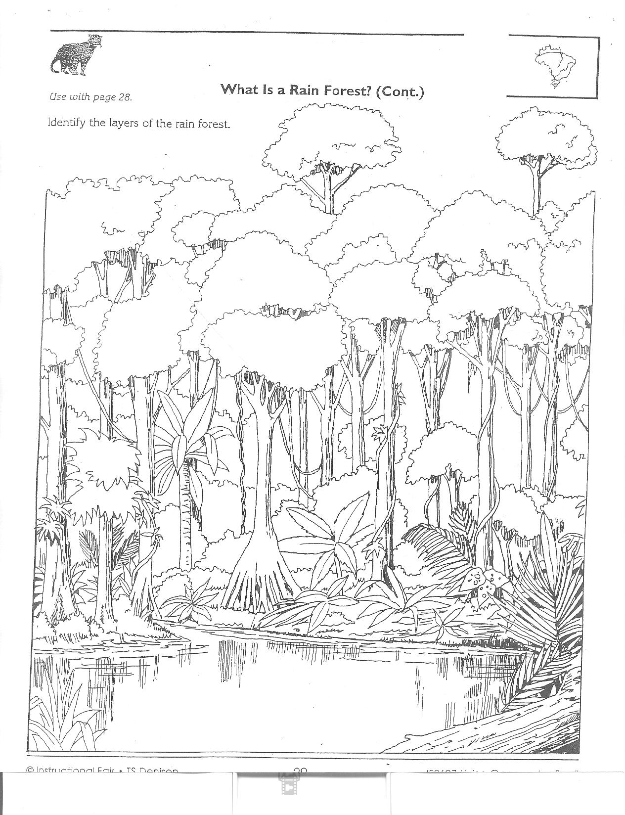 printable forest pictures forest coloring pages ideas whitesbelfast forest pictures printable