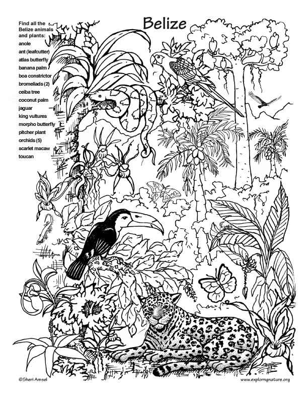 printable forest pictures forest coloring pages printable at getcoloringscom free printable forest pictures