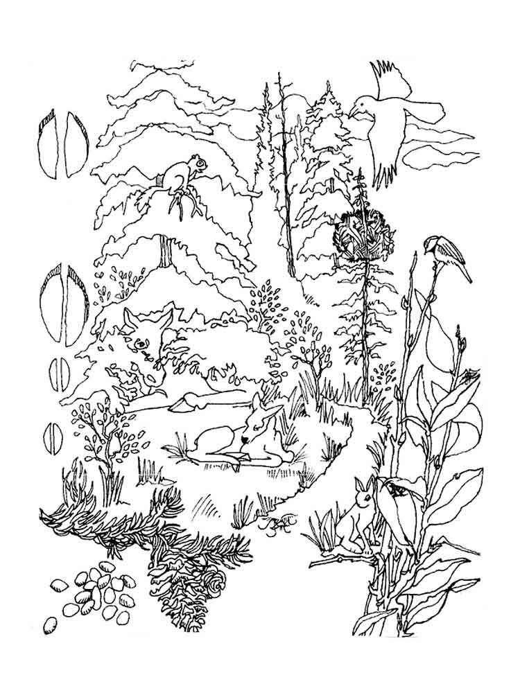 printable forest pictures forest coloring pages printable coloring home printable pictures forest
