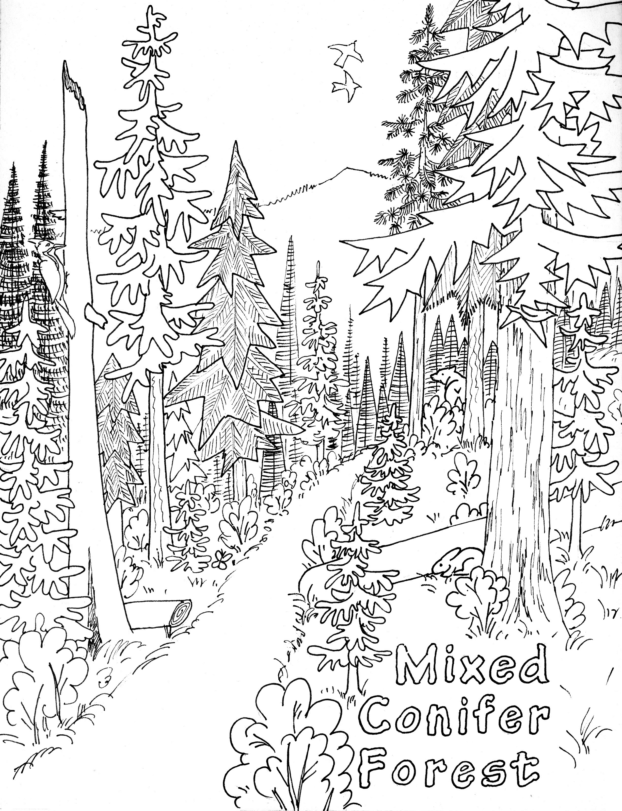 printable forest pictures free rainforest coloring pages free coloring pages forest pictures printable