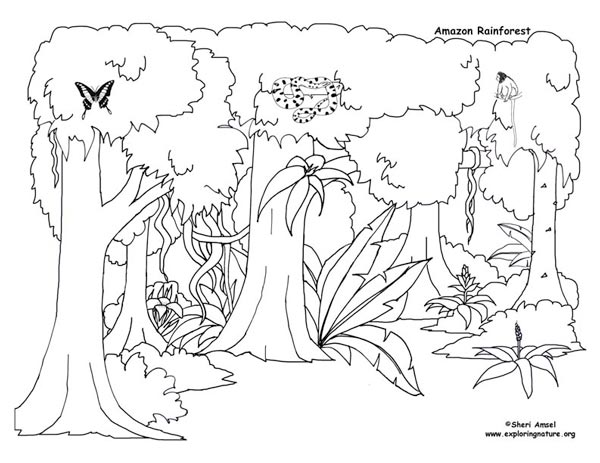 printable forest pictures printable rainforest coloring pages at getcoloringscom printable pictures forest