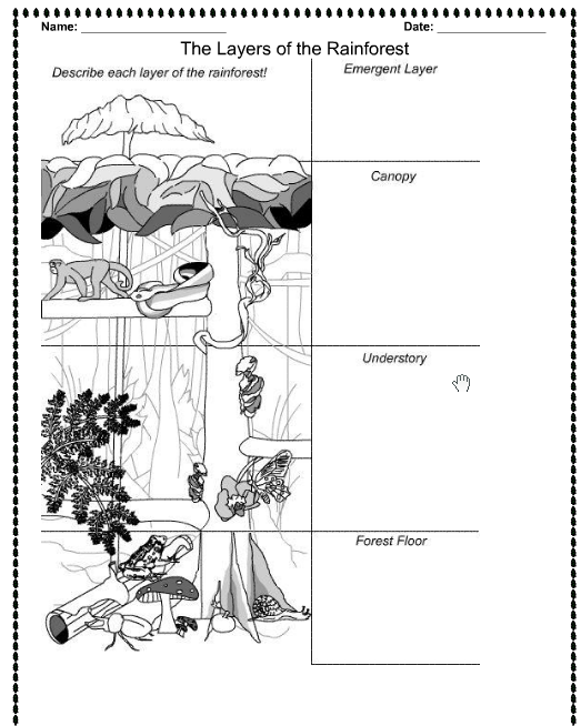 printable forest pictures rainforest activities and printables the crafting chicks pictures forest printable