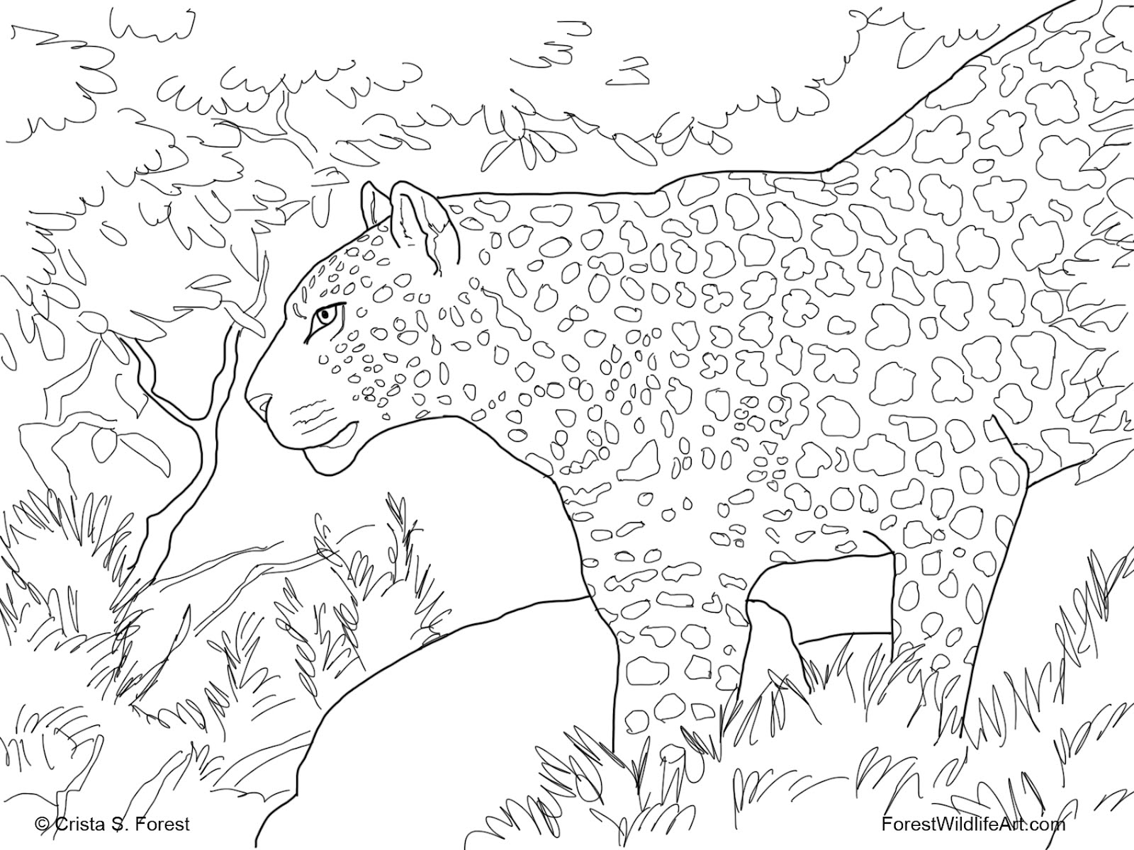 printable forest pictures rainforest coloring page free forest coloring pages forest printable pictures